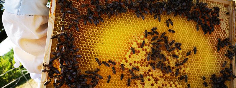 BINZEL_Bees_2021_banner